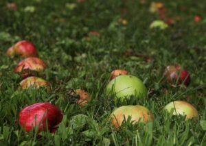 Анекдот про яблоки — ANEKNEWS.RU