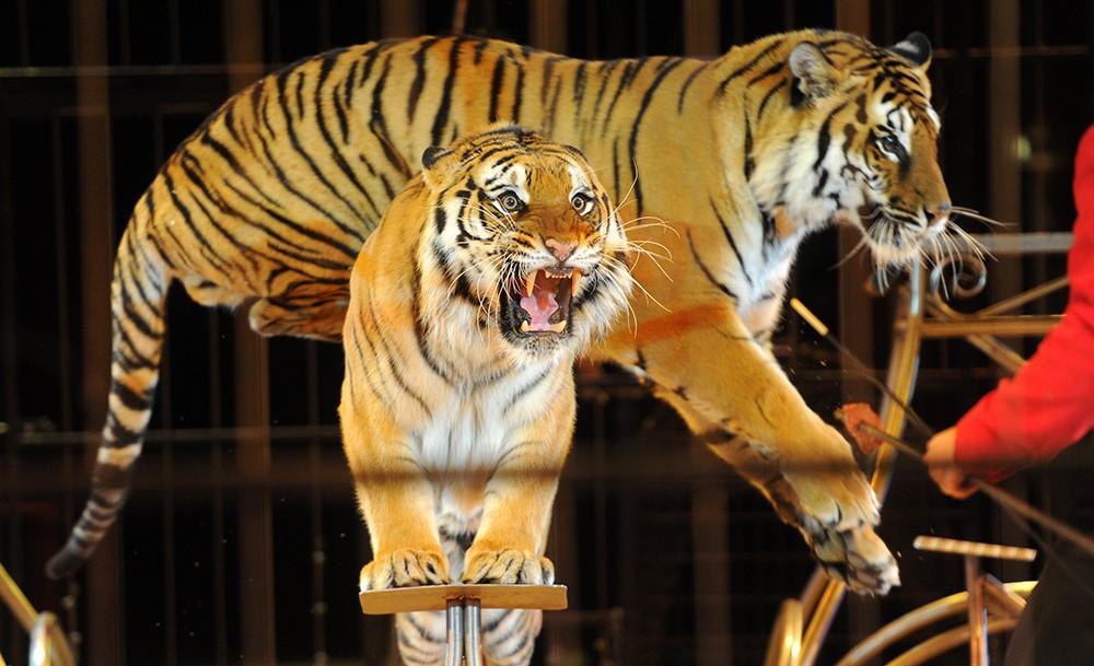 Охота на тигров — анекдоты онлайн