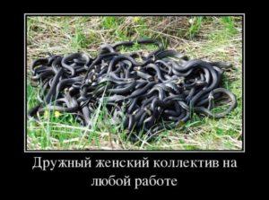 Женский коллектив — анекдоты | ANEKNEWS.RU